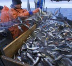 France.. Le ministère de l'Agriculture annonce l'interdiction officielle de la pêche électrique dans les eaux françaises